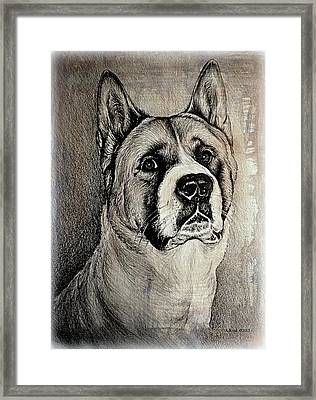 Barney The Dog Framed Print by Andrew Read