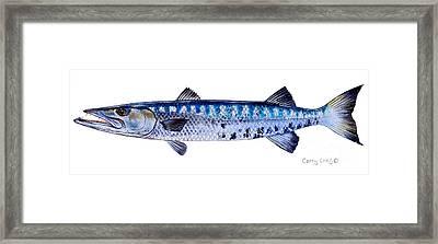 Barracuda Framed Print by Carey Chen