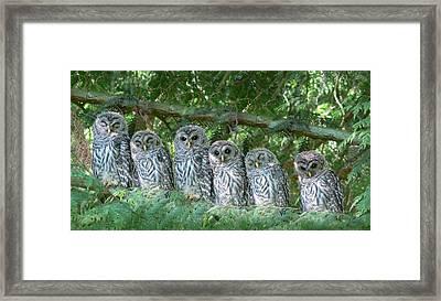 Barred Owlets Nursery Framed Print by Jennie Marie Schell