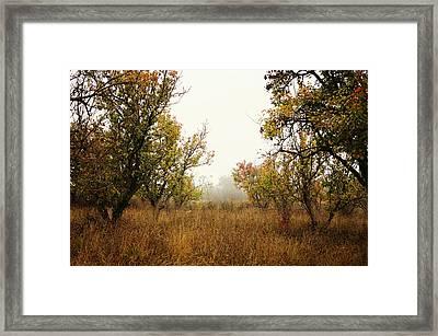 Barren Framed Print by Silvia Floarea Toth