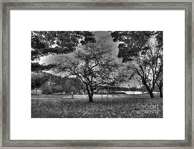 Barren Tree Framed Print by Mark Ayzenberg