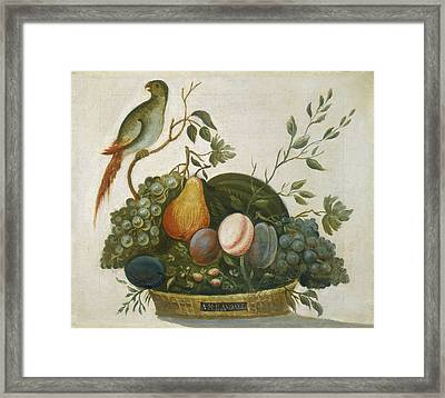 Basket Of Fruit With Parrot Framed Print by Celestial Images