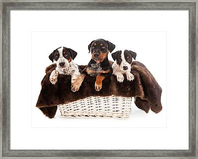 Basket Of Rottweiler Mixed Breed Puppies Framed Print by Susan  Schmitz