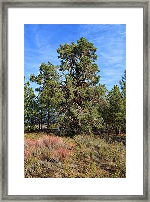 Basking In Morning Glory Framed Print by Glenn McCarthy