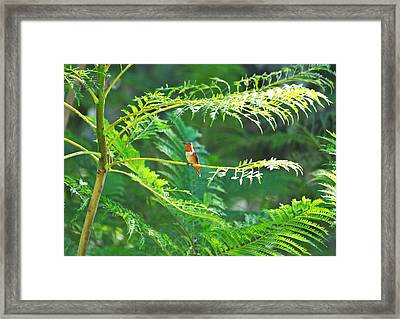 Basking In The Morning Light Framed Print by Lynn Bauer