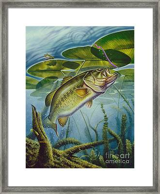 Bass And Frog Framed Print by Jon Q Wright