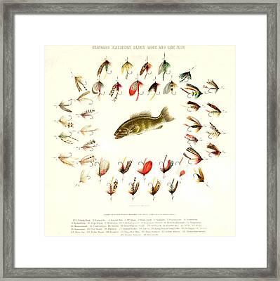 Bass Fishing Flies 1882 Framed Print by Padre Art