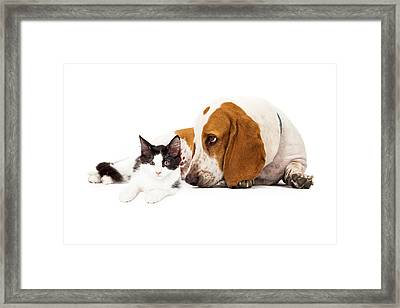 Basset Hound Dog And Kitten Framed Print by Susan  Schmitz