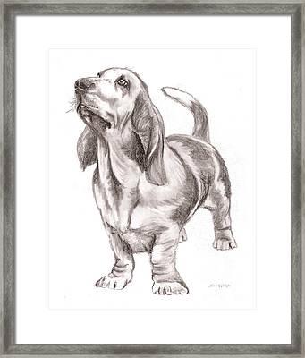 Basset Hound Dog Framed Print by Nan Wright