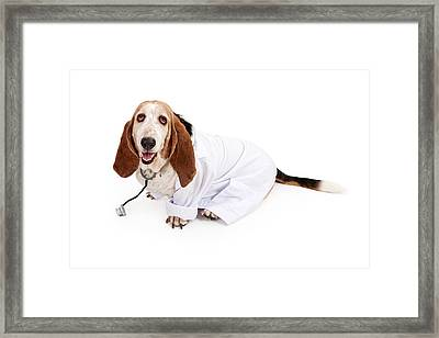 Basset Hound Dressed As A Veterinarian Framed Print by Susan Schmitz