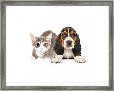 Basset Hound Puppy And Kitten Framed Print by Susan Schmitz