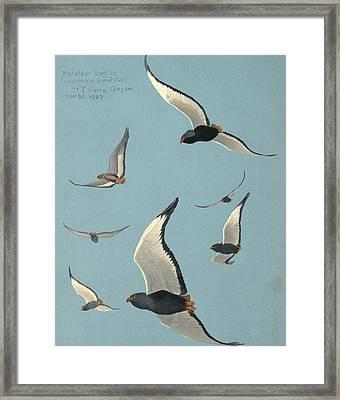 Bateleur Eagles Framed Print by Louis Agassiz Fuertes