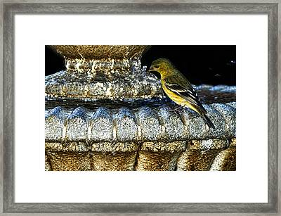 Bath Time Framed Print by Camille Lopez