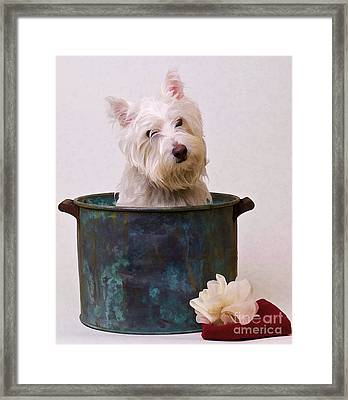 Bath Time Westie Framed Print by Edward Fielding