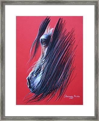Bay Arabian Horse Framed Print by Paulina Stasikowska