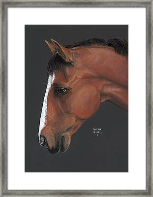Bay Horse  Framed Print by Heather Gessell