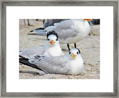 Beach Bird Hairdo Framed Print by Judy Via-Wolff