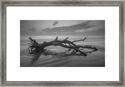 Beach Bones Framed Print by Debra and Dave Vanderlaan