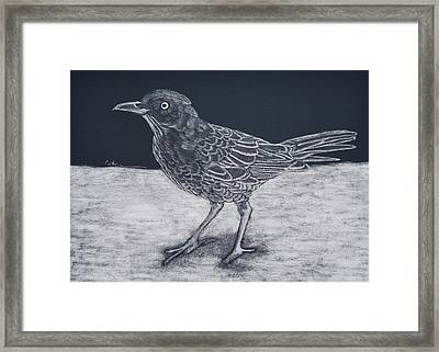Beach Bum Framed Print by Diane Cutter