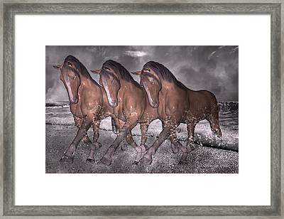 Beach Horse Trio Night March Framed Print by Betsy Knapp