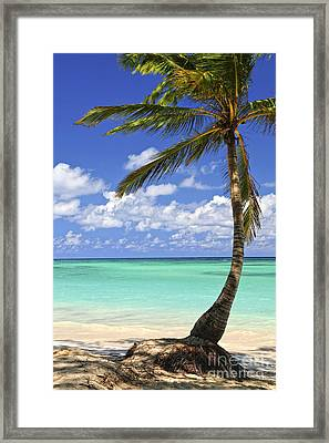 Beach Of A Tropical Island Framed Print by Elena Elisseeva