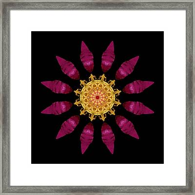 Beach Rose Iv Flower Mandala Framed Print by David J Bookbinder