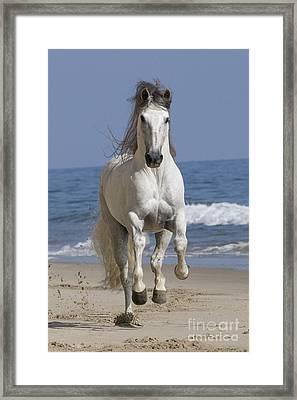 Beach Run Framed Print by Carol Walker
