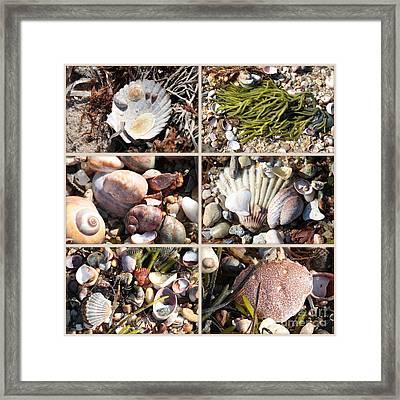 Beach Treasures Framed Print by Carol Groenen
