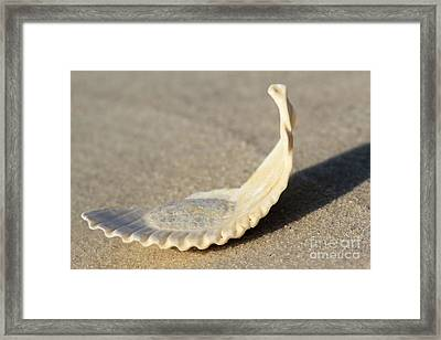 Beached Framed Print by Adam Jewell