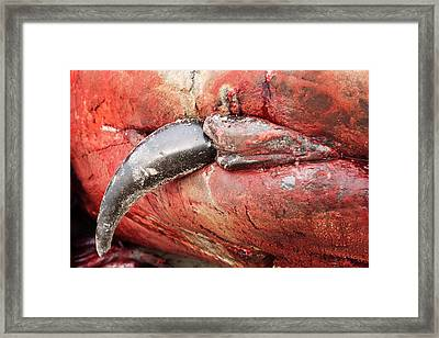 Beached Sperm Whale Penis Framed Print by Thomas Fredberg