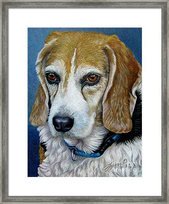 Beagle - Colored Pencil Framed Print by Beverly Fuqua