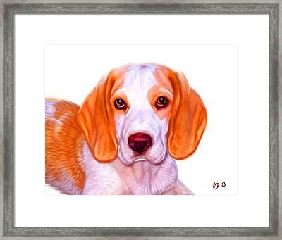 Beagle Dog On White Background Framed Print by Iain McDonald