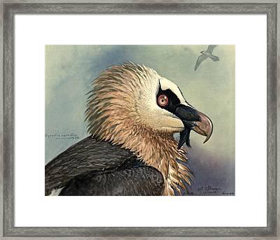 Bearded Vulture Framed Print by Louis Agassiz Fuertes