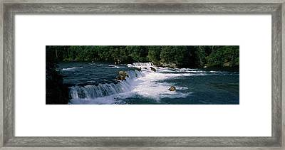 Bears Fish Brooks Fall Katmai Ak Framed Print by Panoramic Images
