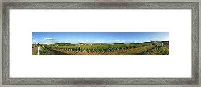 Beaujolais Vineyard, Jully-les-buxy Framed Print by Panoramic Images