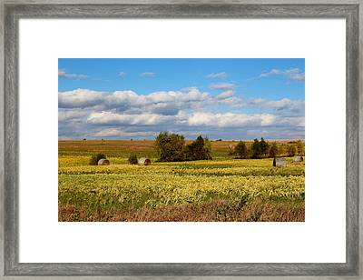 Beauti Fall Framed Print by Elizabeth Sullivan