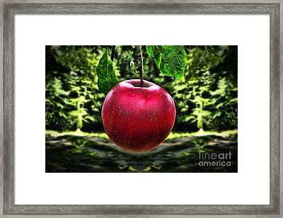 Beautiful Apple Framed Print by Milan Karadzic
