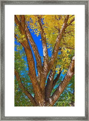 Beautiful Blue Sky Autumn Day Framed Print by James BO  Insogna