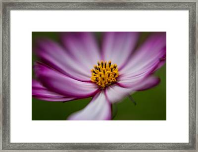 Beautiful Blur Framed Print by Scott Campbell