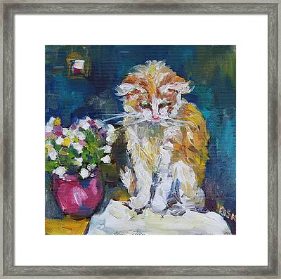 Beautiful Cat Dohchi Framed Print by Becky Kim