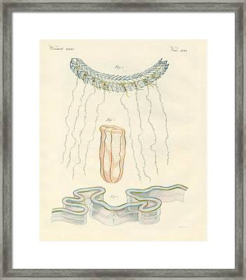 Beautiful Comb Jellies Framed Print by Splendid Art Prints