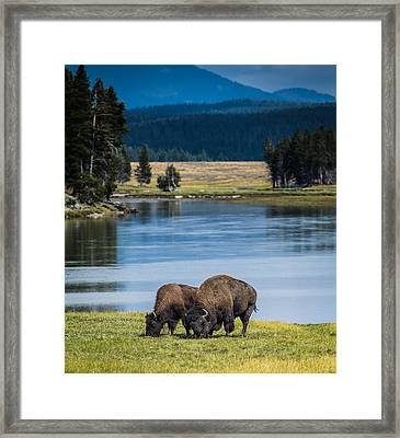 Beautiful Couple Framed Print by Jeff Donald