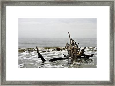Beautiful Demise Framed Print by Skip Willits