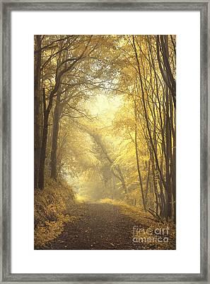 Beautiful Fall Framed Print by Evelina Kremsdorf