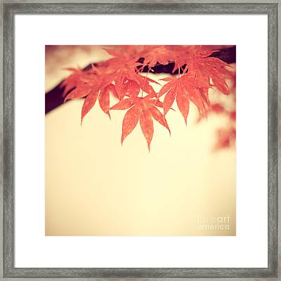 Beautiful Fall Framed Print by Hannes Cmarits