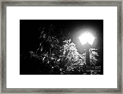 Beautiful Lamp Light In The Dark Framed Print by Fatemeh Azadbakht