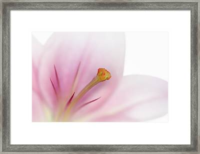 Beautiful Lily Framed Print by Melanie Viola