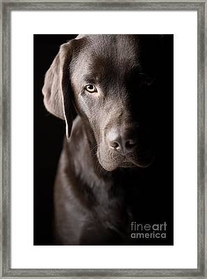 Beautiful Low Key Labrador Framed Print by Justin Paget