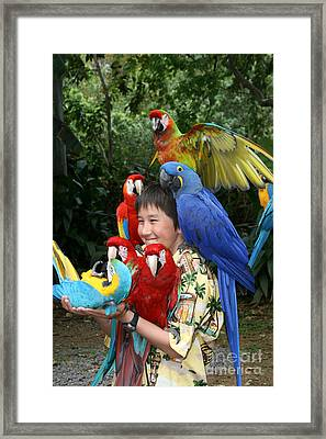 Beautiful Macaw - Garden Of Eden Puohokamoa Valley Maui Hawaii Framed Print by Sharon Mau