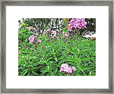 Beautiful Moments  Framed Print by Robert  Nacke